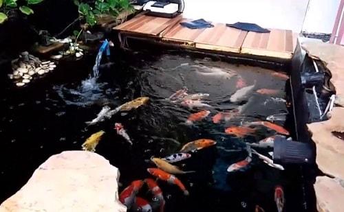 Download 440+ Gambar Desain Kolam Ikan Koi Minimalis HD Terbaik